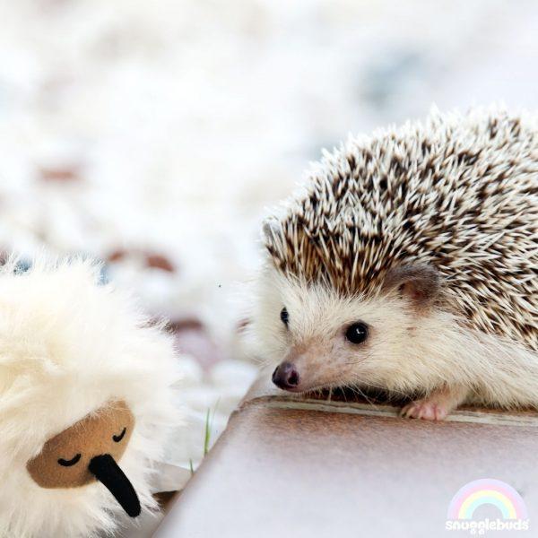 Coco and hedgehog